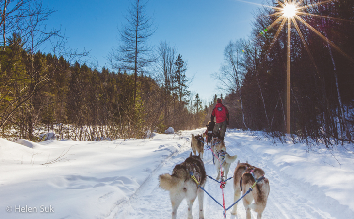 dogs mushing with winterdance dog sled tours