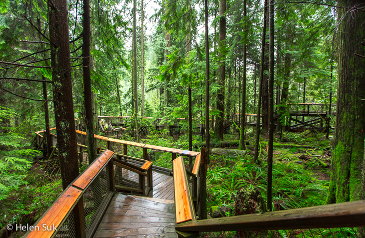 wooden boardwalk through the rainforest at capilano suspension bridge park vancouver
