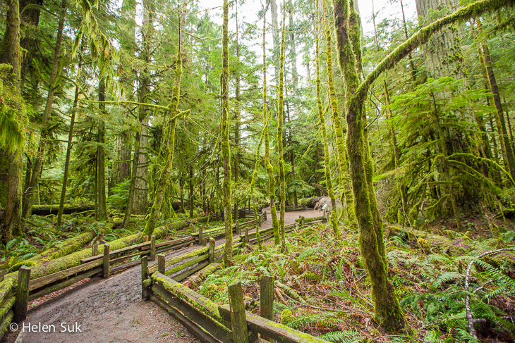 cathedral grove bc
