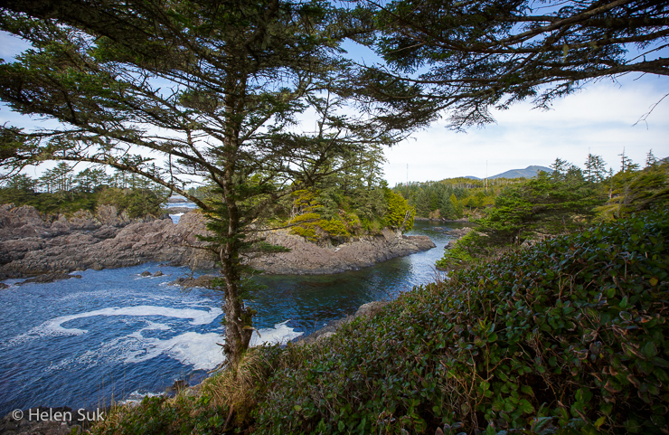 wild pacific trail, ucluelet, ucluelet trail, ucluelet hiking, tofino ucluelet, best hikes in bc