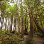 Vancouver Island Hiking: Tofino and Ucluelet