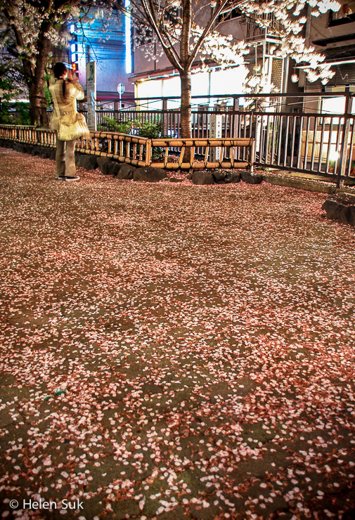 night scene of fallen cherry blossom petals