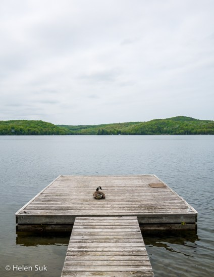 goose on eagle lake