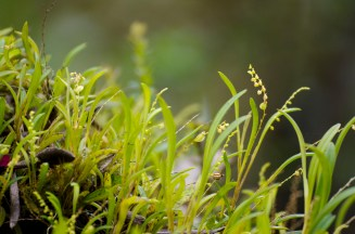 The tiniest orchid on the trail.