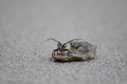 Some strange creatures can be found at the beach.