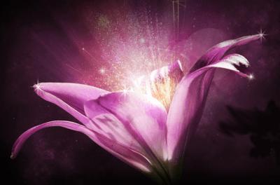 Centifolia Flower