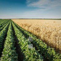高所得稲作農家の選ぶ第2作目は? 麦と大豆を徹底比較!(前編)