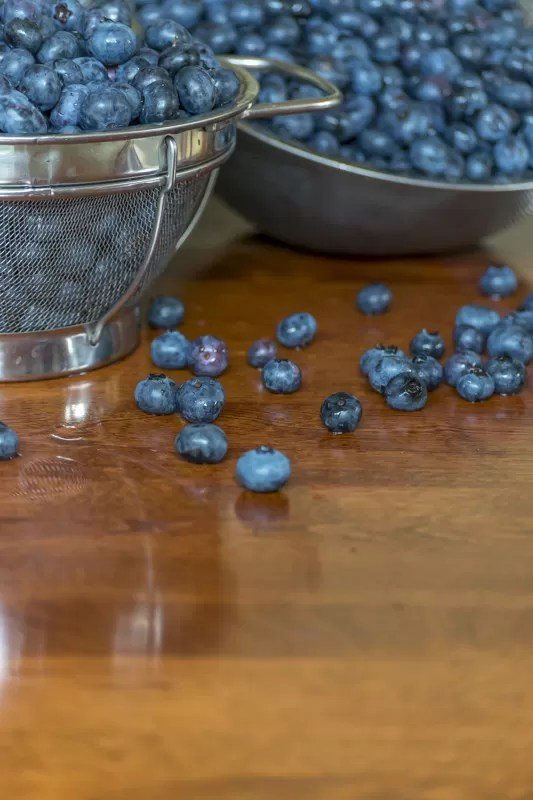 Just harvested blueberries ready to be made into Jam and Hand Pies, as well as frozen for future use.