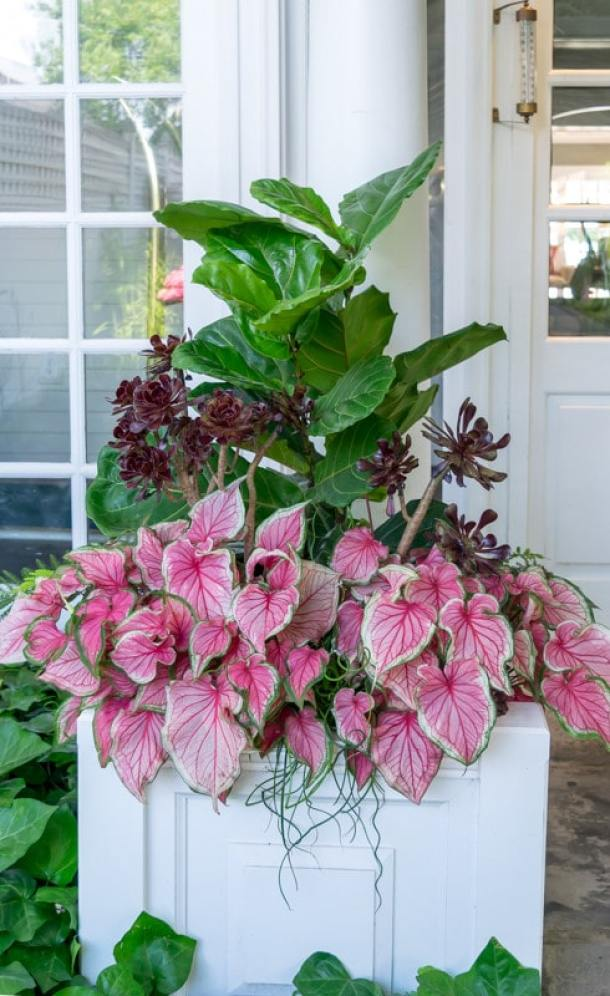 Recipes' to help you create stunning container gardens. Beautiful images and detailed 'recipes' including specific plants for several container gardens.
