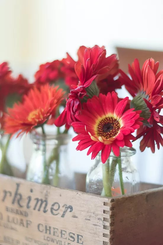 No cutting garden is complete without the bright and cheery colors of Gerbera Daisies