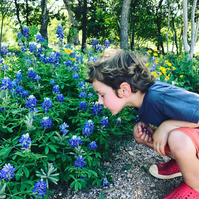 b is for bluebonnet