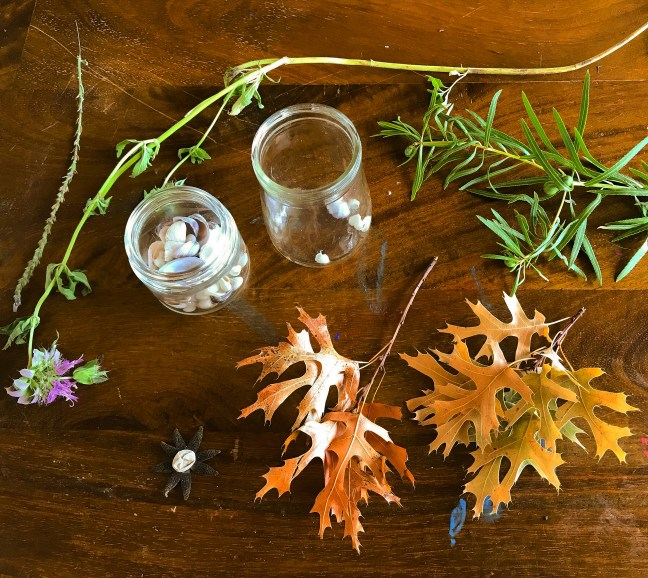 A Charlotte Mason Nature Study Lesson