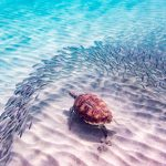 Curacao wellness trip