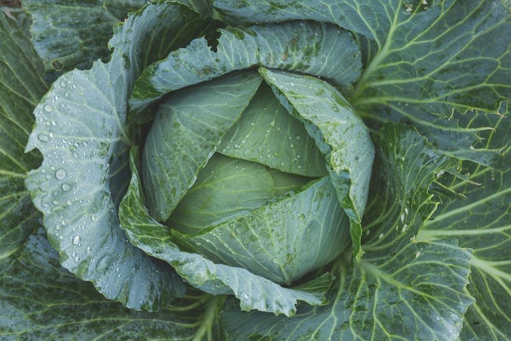 How Sauerkraut Benefits Support Whole-Body Health