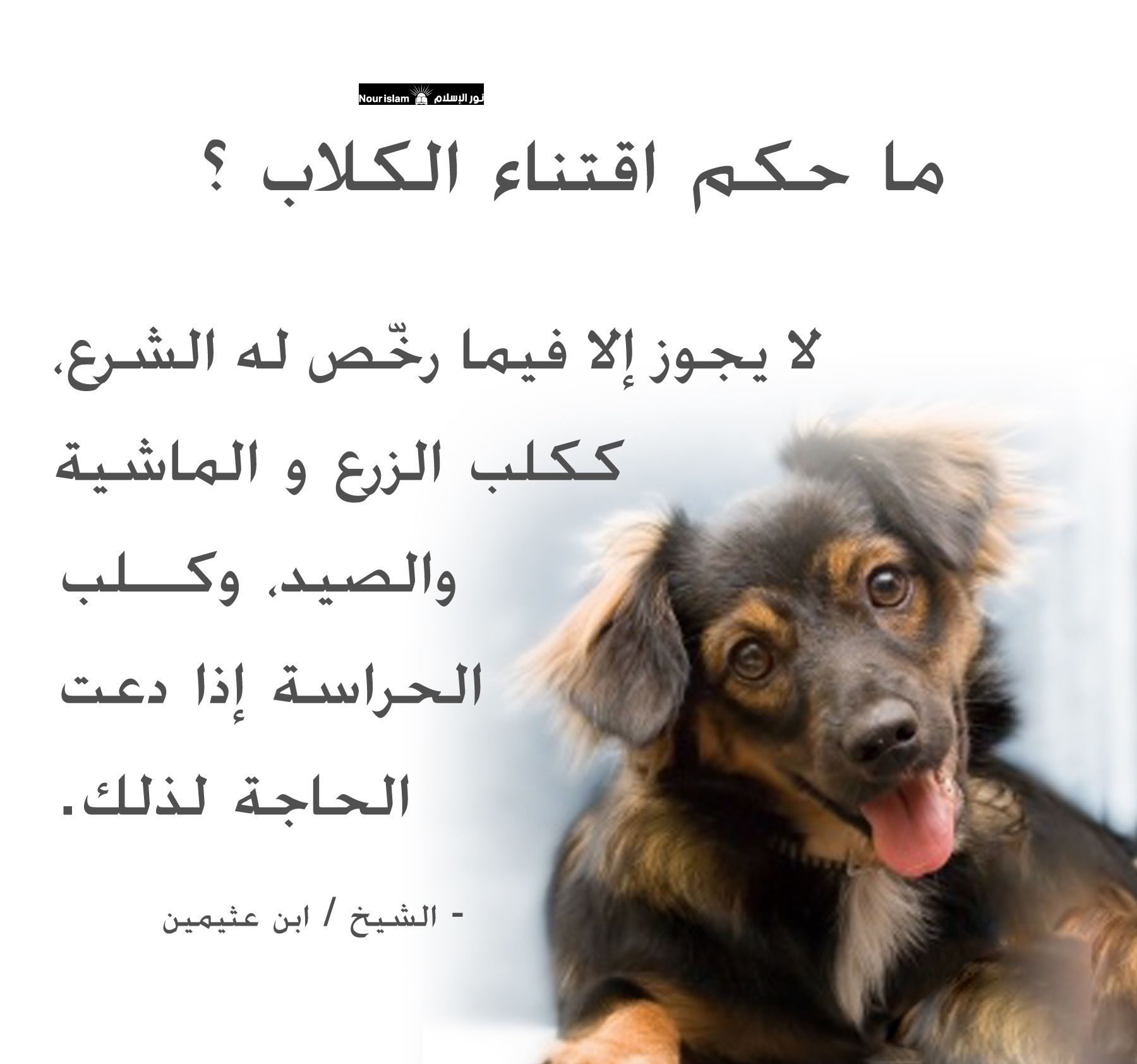 حكم تربية الكلاب في المنزل فتحي الرباعي نور الاسلام حكم تربية الكلاب في المنزل فتحي الرباعي