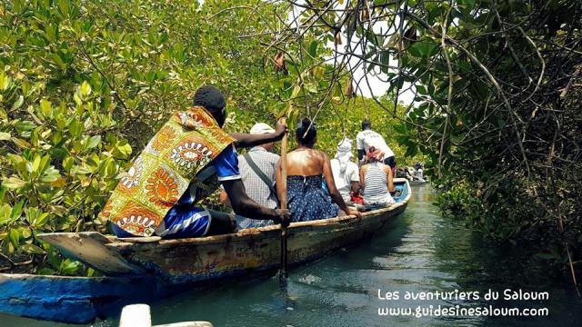 Pierre et son équipe vous proposent de découvrir la région du Sine Saloum à travers de balades en pirogues dans la mangrove.
