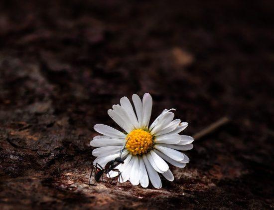Esprit de la fourmi - soin à distance