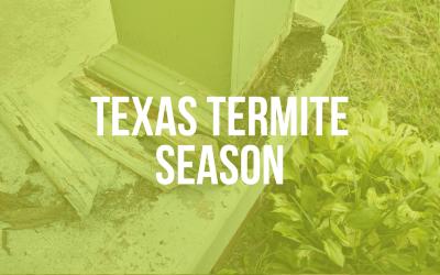 Texas Termite Season