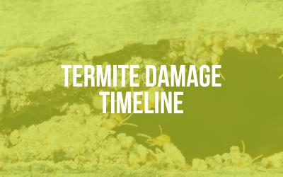 Termite Damage Timeline