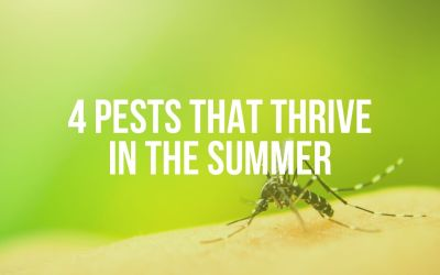4 Pests That Thrive in the Summer