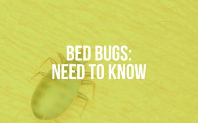 Bed Bugs: Need to Know