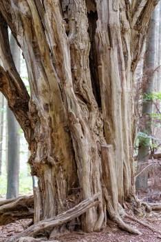 Der Alte im Wald_170904_15