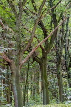 Der Alte im Wald_170904_3