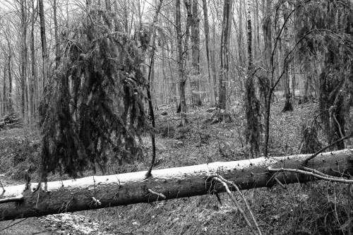 Friederike im Beusterwald_180121_14