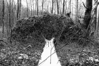 Friederike im Beusterwald_180121_3