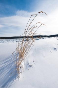 Beuster_Winter (6 von 26)