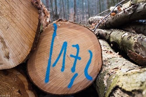 Im Wald nach dem Sturm (12 von 23)
