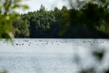 Koldinger See (14 von 29)