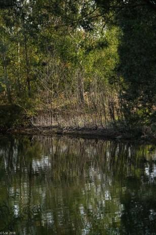 Koldinger See (25 von 29)