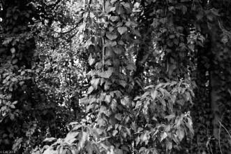 Wrisbergholzen (12 von 58)