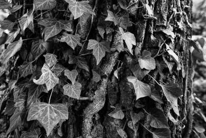 Wrisbergholzen (40 von 58)