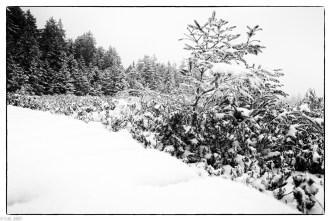 Schnee im Hochmoor (10 von 15)
