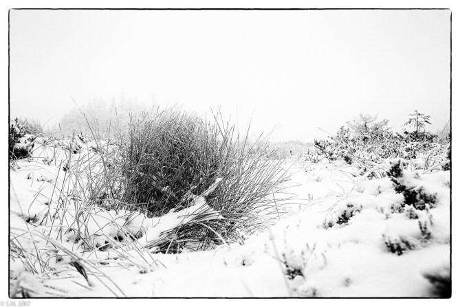 Schnee im Hochmoor (11 von 15)