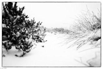 Schnee im Hochmoor (15 von 15)