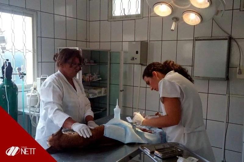 Curso Auxiliar Veterinário