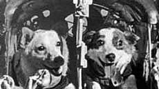 The dogs Belka and Strelka; pravda.ru