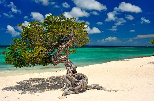 Aruba, playa Eagle.