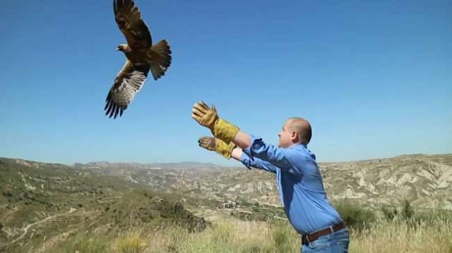 El delegado de Medio Ambiente durante la suelta de un águila Calzada.
