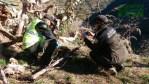 Aparecen cuatro jabalíes muertos por trampas ilegales