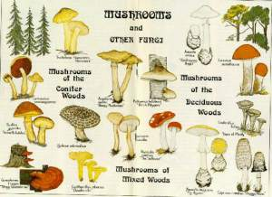 Mushrooms & Other Fungi | Lands and Forestry | Government of Nova Scotia