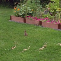 "Nightmares about Hares - a ""Guest Post"" (written by my daughter!!)"