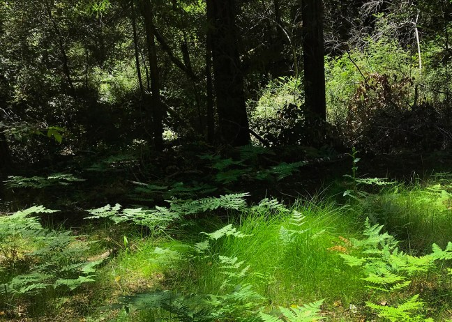 Meadow and trees, Big Basin, CA - Photo by Erik S. Peterson