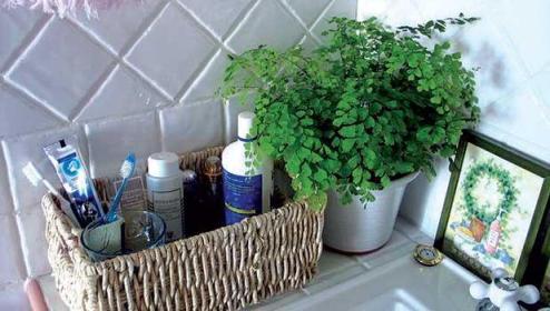 plantas-para-baño