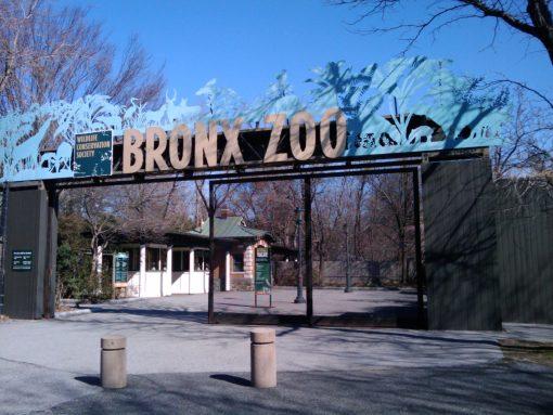 Nova York em novembro - atrações no Bronx Zoo