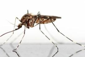Přítulný hmyz - blechy, vši,...