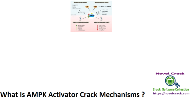 What Is AMPK Activator Crack Mechanisms